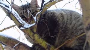 cat on cat on the tree in the snow