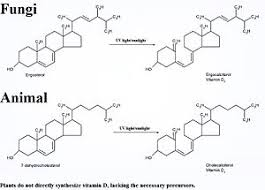 Uv Lamp Vitamin D Supplement by Vitamin D Wikipedia