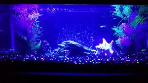 20 gallon aquarium update wall