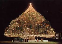 Private Efforts Giving New Life To Worlds Largest Living Christmas Tree Celebration In Wilmington