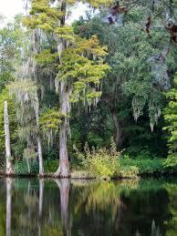 fleur et plante du lac images gratuites forêt marais plante fleur lac étang