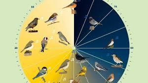vogelgezwitscher vogeluhr wann singt welcher vogel