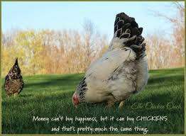 The Chicken Chick®: Fighting To Legalize Backyard Chickens ... 1084 Best Raising Chickens In Your Back Yard Images On Pinterest 682 Chicken Coops 632 Backyard Ducks Keeping Backyard Chickens Agriculture And Food 100 Where To Buy Or Meet The Best 25 Ideas Pharmacologist Warns That Eggs From Pose Poultry Poultry Hub 7 Reasons You Should Raise 50 Pams