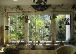 bonsai das schönste hobby der welt indoor bonsai fenster