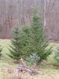 Christmas Tree Shops Paramus New Jersey by Baristanet Your Local Homegrown Online Community Since 2004