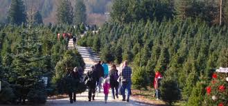 Eustis Christmas Tree Farm by Images Of Christmas Tree Langley Halloween Ideas