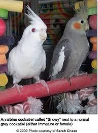 Parrot Caught Singing Bodies Hit The Floor by 77 Best Parrots Images On Pinterest Parrots Friends And Parakeets