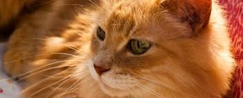 orange cat names naming your orange cat name ideas for cats with orange or