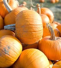 Carvable Foam Pumpkins Walmart by Halloween How To
