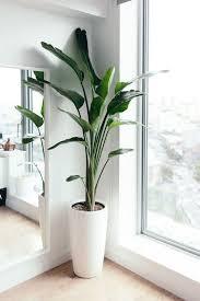über 30 schöne zimmerpflanzen für ihr zuhause schone