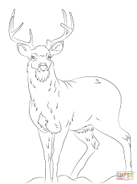 Click The White Tail Deer Coloring Pages