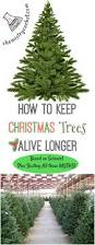 Sugar Or Aspirin For Christmas Tree by How To Keep Christmas Trees Alive Longer Based On Science