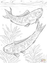 Smart Design Freshwater Fish Coloring Pages Download