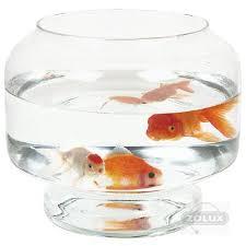 boule en verre 25 cm 5 l avec pied materiel vpc aquariums