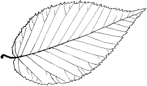 Simple Leaf Outline Autumn Leaves Coloring