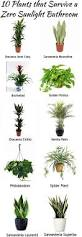 Good Plants For Windowless Bathroom by Best 25 Bathroom Plants Ideas On Pinterest Best Bathroom Plants