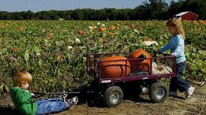 Kent Farms Pumpkin Patch by Guide To Seattle Area U Pick Pumpkin Patches Corn Mazes And Farm