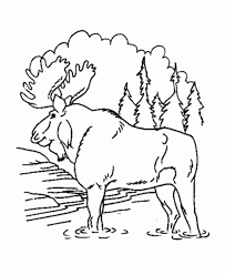 Moose In The Forest Free Animal Coloring Pages
