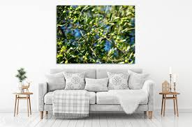 wandbild olivenbaum