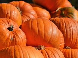 Best Pumpkin Patch In San Bernardino County by Best California Cities To Celebrate Halloween Go Trick Or
