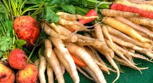 comment cuisiner des crosnes légumes anciens d hiver comment les préparer le crosne le