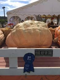 Uesugi Farms Pumpkin Patch by California U0027s Largest Pumpkin Weighs In At Uesugi Farms 26th Annual