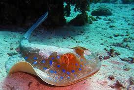 aquarium geant a visiter belgique visiter nausicaa plus gros aquarium d europe