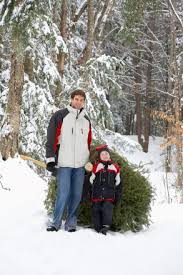 Sugar Or Aspirin For Christmas Tree by How To Pick The Perfect Illinois Christmas Tree Illinois Farm