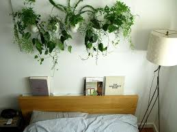 Wall Of Plants By The Bed Cleaning Air For A Good Night Sleep
