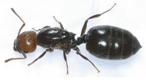 Best Home Reme s to Get Rid of Ants in Kitchen and Home