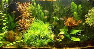 club d aquariophilie de st amand les eaux vends engrais pour