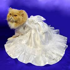 cat wedding dress i am the kitty waiting for the cat groom but he is