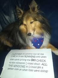 The best case of dog shaming… this is hilarious by Anu Leppänen