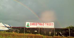 Fraser Fir Christmas Trees Nc by Hart T Tree Farms Christmas Tree Lot Melbourne Florida Location
