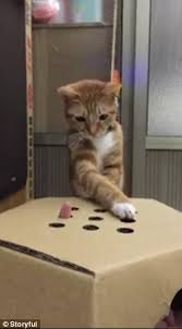 Little Orange Showcases Its Cat Like Quick Reflexes While Playing Whac A Mole