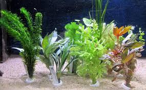plantes en lots lots de plantes en bouquets aux poissons exotiques