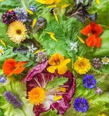 What Kinds Of Pumpkins Are Edible by Of Edible Flowers