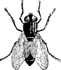 Fly Clipart Black And White