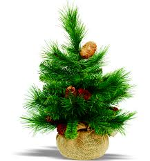 Types Of Christmas Trees To Plant by There Can Be A Big Difference Between Different Types Of Christmas