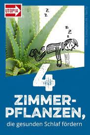 4 zimmerpflanzen die gesunden schlaf fördern fordern