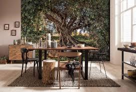 fototapete olivenbaum