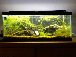New Apartment, New Aquascape! : PlantedTank Cuisine Perfect Aquascape Aquarium Designs Ideas With Hd Backyard Design Group Hlight And Shadow Design For Your St Charles Il Aqua We Share Your Passion For Success Classic Series Grande Skimmer Aquascapes Amazoncom 20006 Aquascapepro 100 Submersible Pump Pond Supply Appartment Freshwater Custom 87 Best No Plant Images On Pinterest Ideas