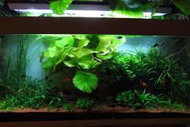 450 liter aquarium im wohnzimmer aquarium forum aus dem