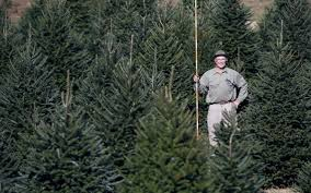 What Kind Of Aspirin For Christmas Tree by A List Of Christmas Tree Farms In Central Kentucky Lexington