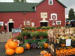 Bengtson Pumpkin Farm Chicago by Patch Picks Pumpkin Patches Romeoville Il Patch