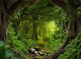 apa perbedaan forest dan jungle belajar sai mati