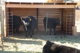 loafing sheds keeping a family cow