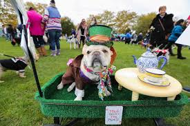 Old Westbury Gardens Dog Halloween by 31 Things To Do On Halloween Weekend On Long Island Newsday