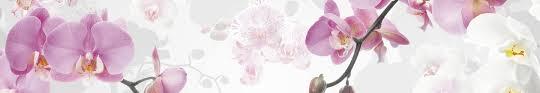 fototapeten mit orchideen auf vlies oder papier versand
