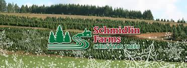 Nordmann Fir Christmas Trees Wholesale by Schmidlin Farms Christmas Trees